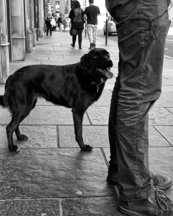 Three legged doggy Glasgow