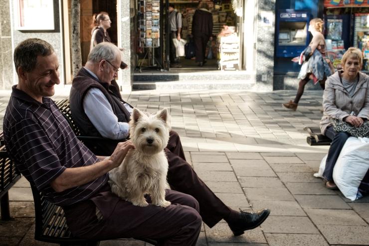 Westy Glasgow