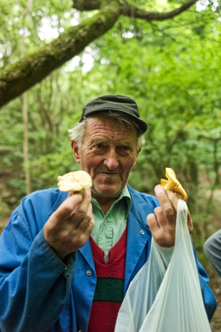 comparing mushrooms 209