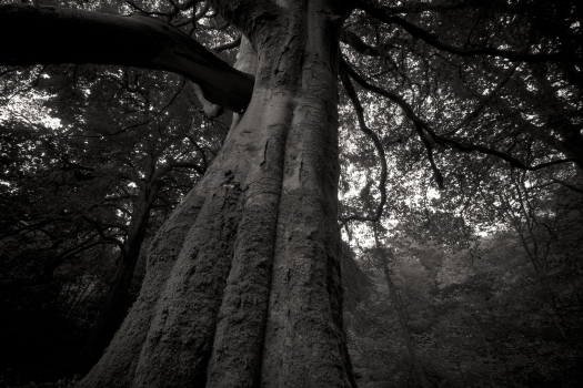 forest 348