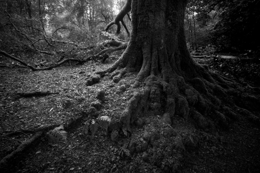 forest 349