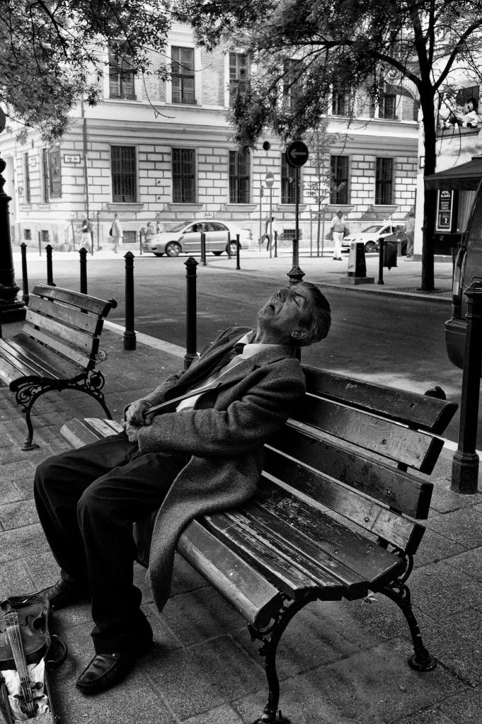 sleeping fiddler 373
