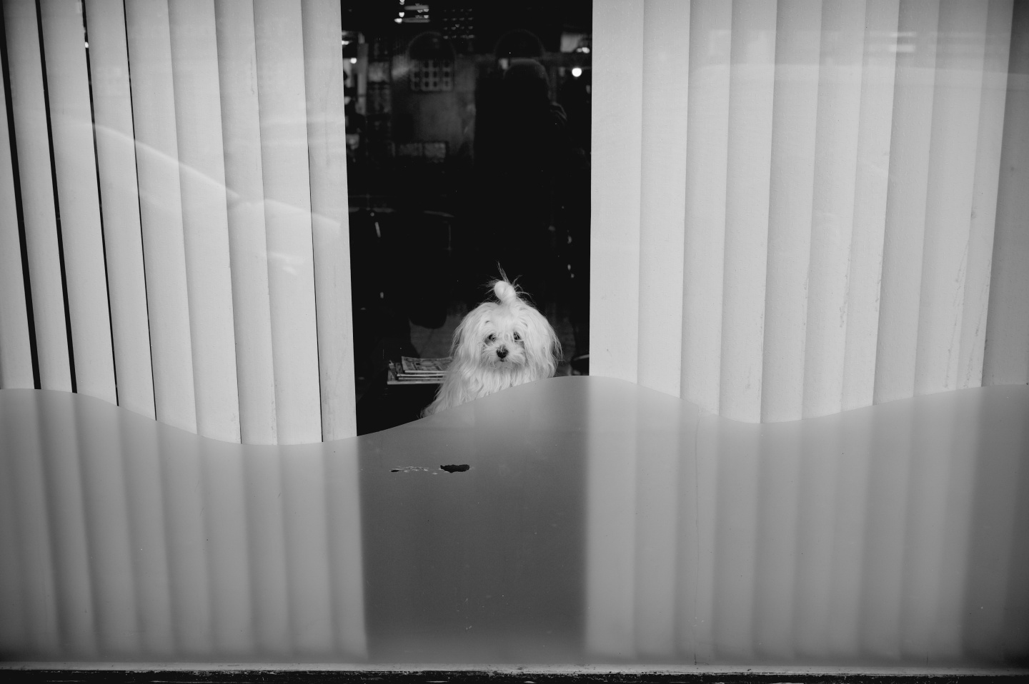 How much is that doggy in thewindow?